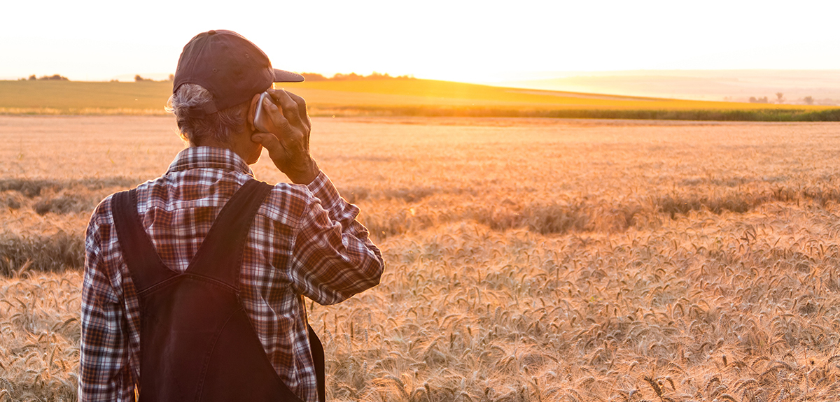 Rear view of farm worker using smart phone in wheat field. Wears casual clothes, a hat.
