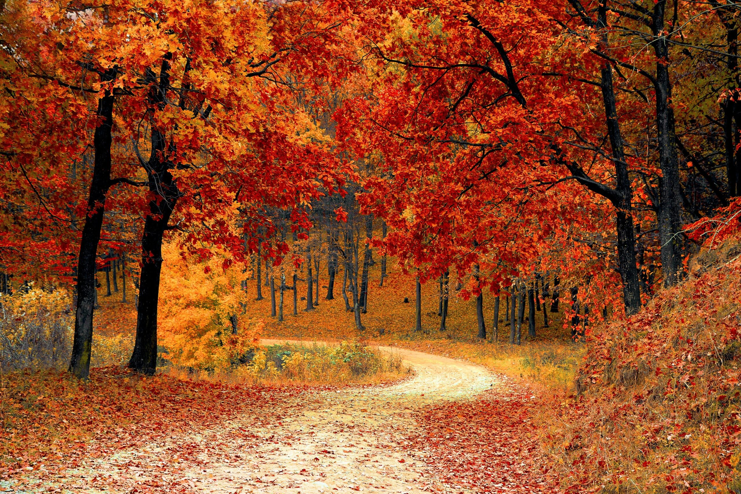 Fall colored trees and leaves line a gravel walking path.